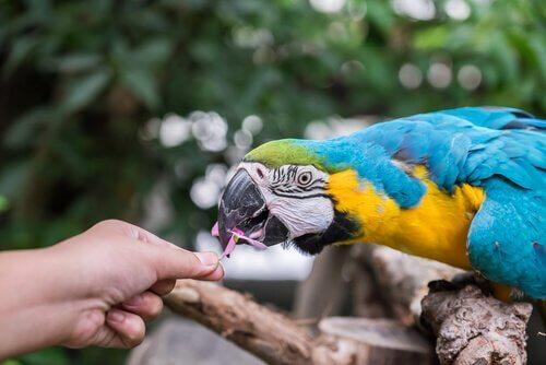 Quatro perguntas antes de você ter um papagaio como animal de estimação