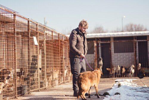 Voluntário em um abrigo para animais