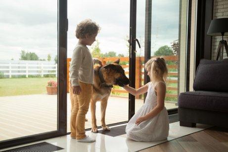 Relação entre crianças e caães