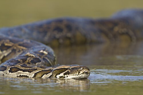 Serpentes na água
