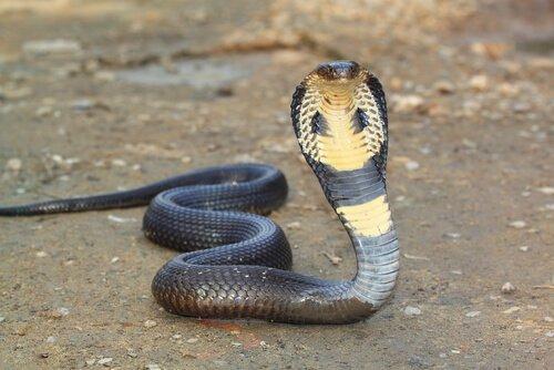 Serpentes no Egito Antigo