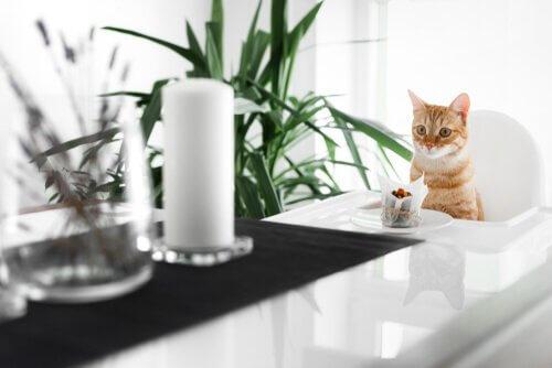 Receitas de tortas caseiras para gatos