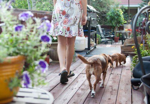 Terapia floral para cães