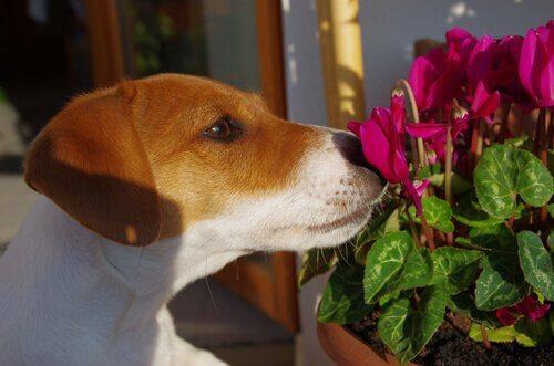 Terapia floral para o seu cão