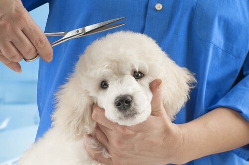 Cortar o pelo dos cães  todos eles necessitam disso  38408ef4299a