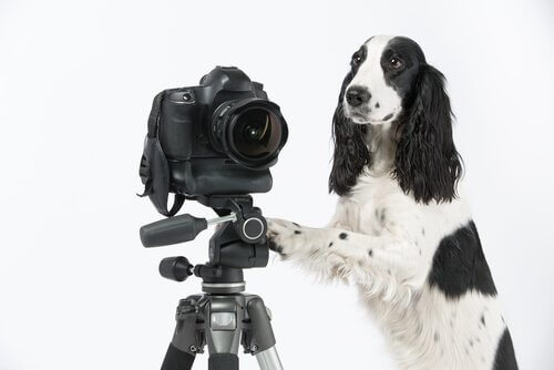 Cachorro ao lado de câmera fotográfica