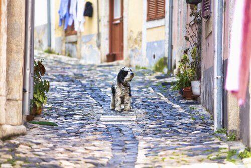 Lisboa com seu cão