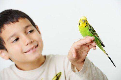 criança e periquito
