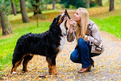 Amor, cão e dona
