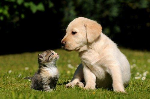 Que animais de estimação não podem viver juntos?