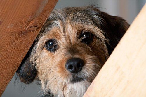 Como não fazer do banho um trauma para o seu cão