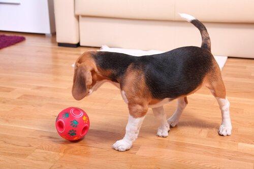 cão brincando com a bola