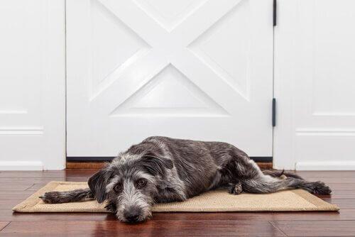Cão triste sozinho em casa