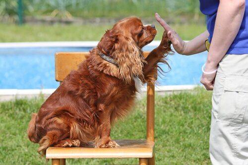 inteligencia social dos cães