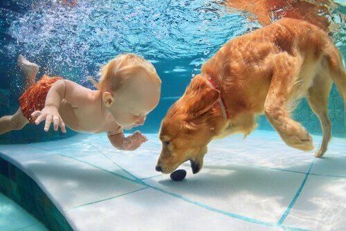 Cão e bebê nadando