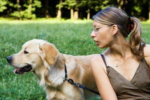 Seu cão não presta atenção em você?Veja estas dicas!
