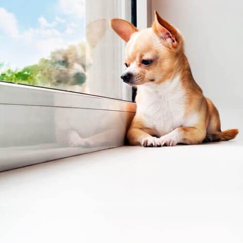 Dicas se o seu cão passa muito tempo sozinho