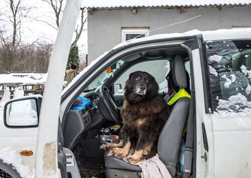 Seu cão tem medo de carros?