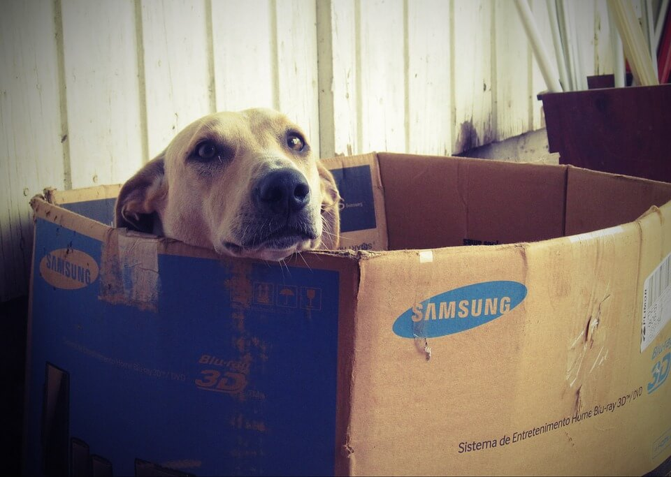 Cachorro em caixa de papelão