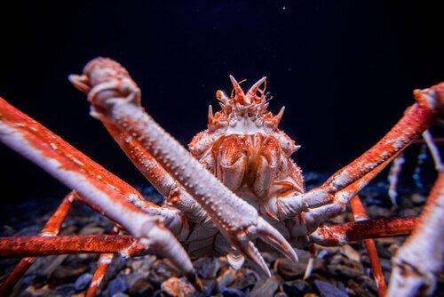 Cinco espécies de caranguejos surpreendentes