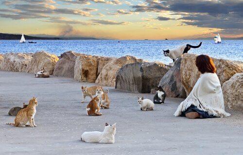 Por que as colônias de gatos devem ser controladas?