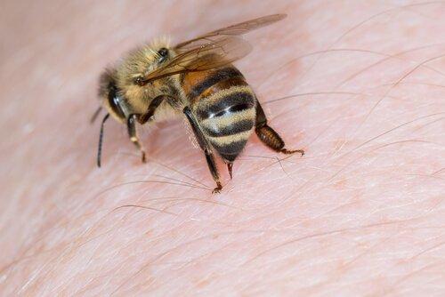 picadas de abelhas