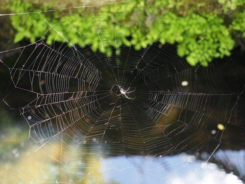 Aranha em sua teia