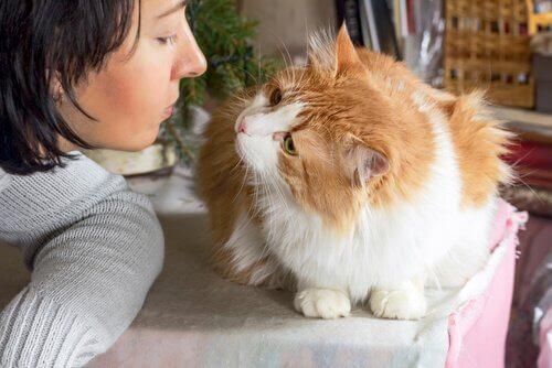 Como saber se seu gato te ama