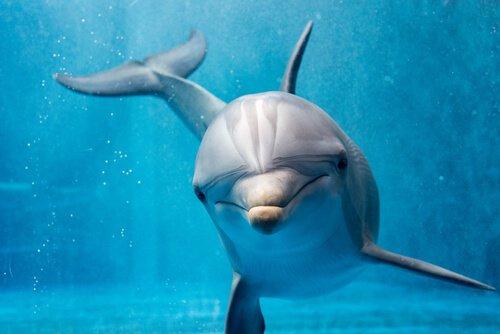 Comportamento dos golfinhos, quase humano?