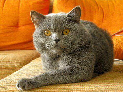 Corrigir um mau comportamento de seu gato