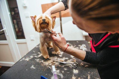 Devo cortar os pelos do meu animal de estimação no verão?