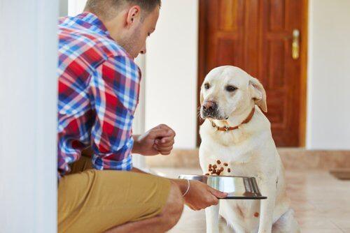 Dono alimentando seu cão