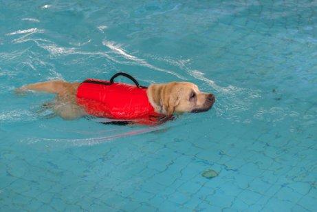 Cachorro fazendo fisioterapia na água