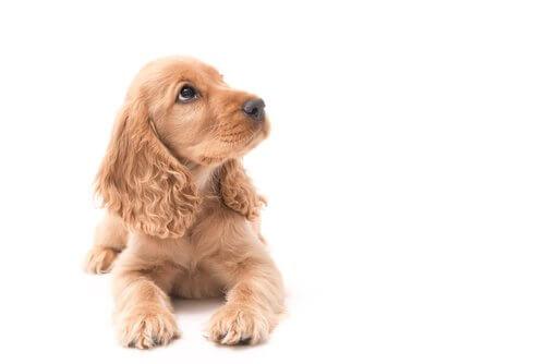 Como fazer com que seu cão te respeite desde filhote