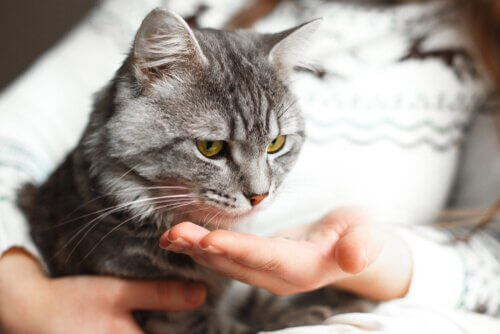 ensinar gato a dar a pata