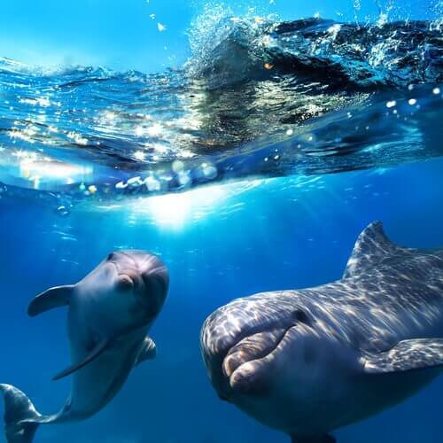 golfinhos no fundo do mar