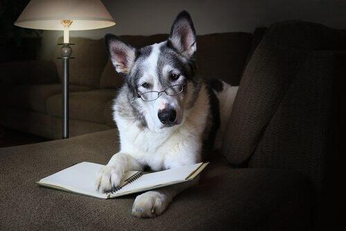 Como melhorar as habilidades sociais do cão