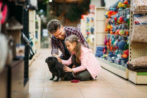ir às compras com seu animal de estimação