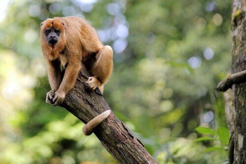 estrutura social dos macacos