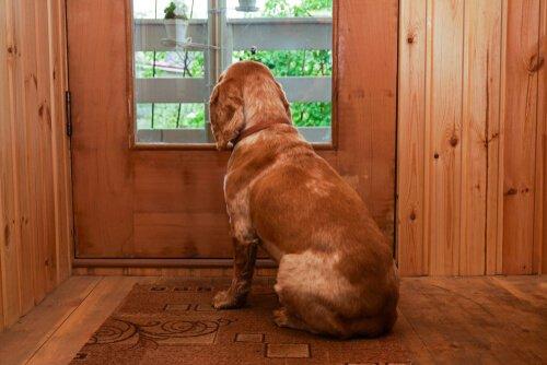 Cão espera dono