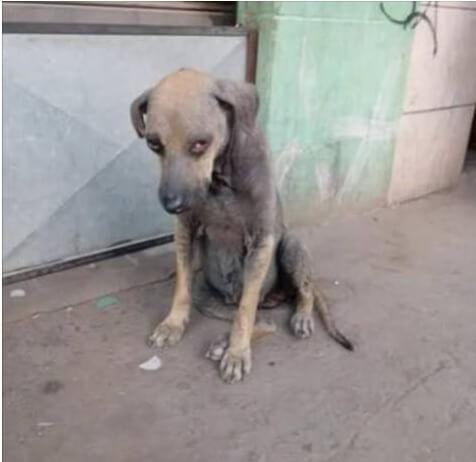 Cão de rua precisando de resgate