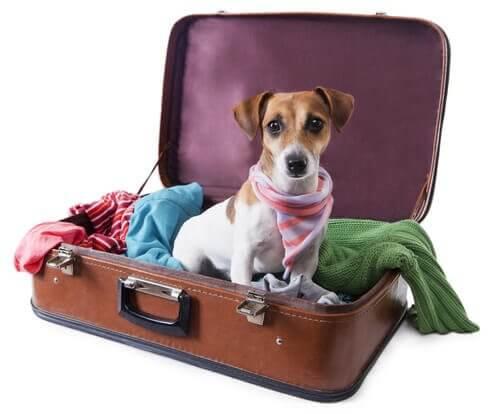 cão na mala de viagem