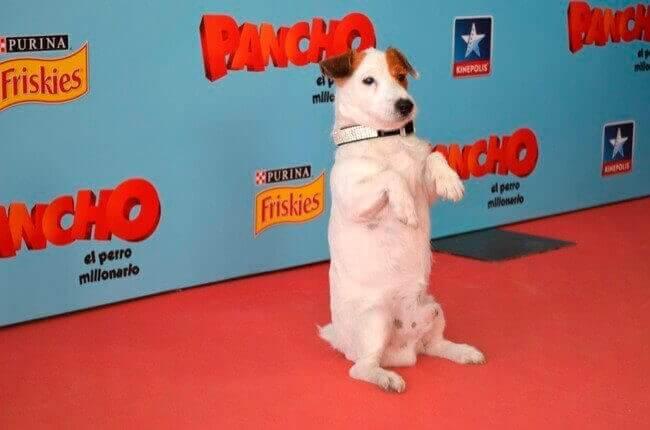 Homenagem aos cães mais famosos do cinema e da TV