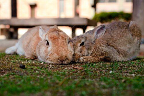 Como desparasitar seu coelho