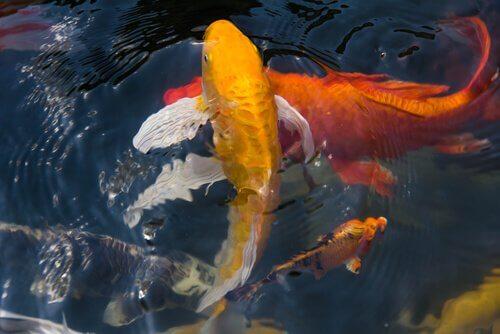 Peixes de rio na atualidade