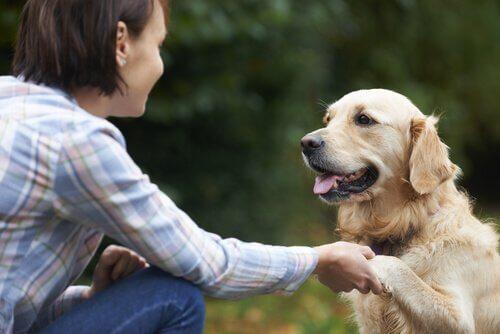 Seu animal de estimação te ensina a aprender
