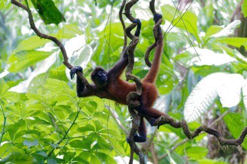 Macaco em árvore