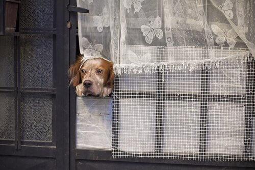 Quantos dias o seu cão pode ficar sozinho?