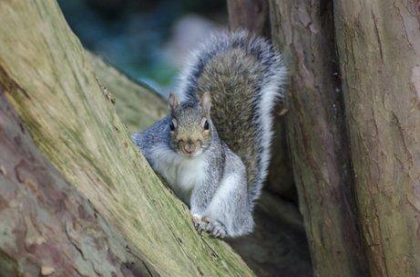 Esquilos: conheça os tipos e suas características