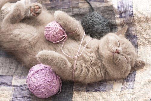 gato brincando com novelos de lã